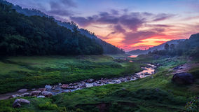 Foresta del ruscello Fotografie Stock
