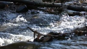 Foresta del ruscello del chiacchierio in primavera stock footage