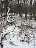 Foresta del ` s di inverno Fotografie Stock