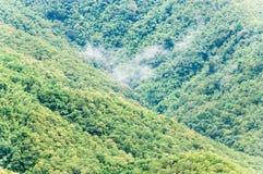 Foresta del tek con la nebbia leggera Fotografie Stock Libere da Diritti