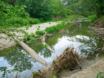 Foresta del terreno alluvionale Fotografia Stock