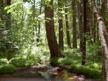 Foresta del Yosemite Fotografie Stock Libere da Diritti