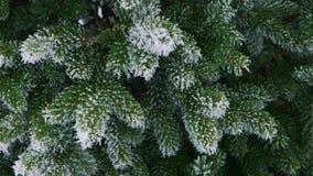 Foresta dell'abete di inverno con gli alberi di Natale nevosi  archivi video