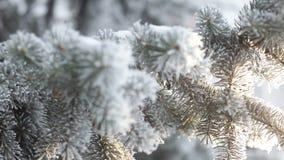 Foresta dell'abete di inverno con gli alberi di Natale nevosi Abeti innevati un giorno di inverno Priorità bassa di inverno La ne video d archivio
