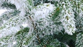 Foresta dell'abete di inverno con gli alberi di Natale nevosi Primo piano dei rami con neve stock footage