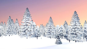 Foresta dell'abete rosso di Snowy contro il cielo di tramonto Fotografia Stock