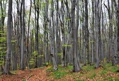 Foresta dell'albero Fotografie Stock