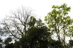 Foresta dell'albero Immagini Stock Libere da Diritti