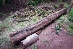 Foresta dell'albero del ceppo Immagine Stock