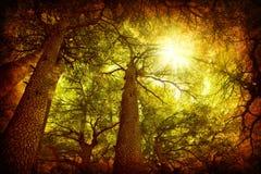 Foresta dell'albero di cedro Immagini Stock
