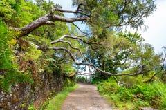 Foresta dell'alloro, isola del Madera, Portogallo Fotografia Stock Libera da Diritti