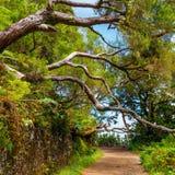 Foresta dell'alloro, isola del Madera, Portogallo Immagini Stock Libere da Diritti