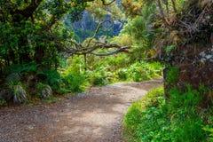 Foresta dell'alloro, isola del Madera, Portogallo Fotografie Stock Libere da Diritti