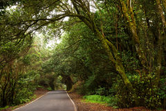 Foresta dell'alloro in isole Canarie Immagine Stock