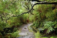 Foresta dell'alloro sulla Madera Fotografie Stock Libere da Diritti