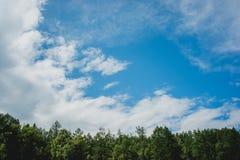 Foresta dell'Altai fotografie stock