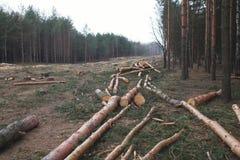 Foresta dell'ambiente, della natura e di disboscamento - abbattimento degli alberi fotografia stock libera da diritti