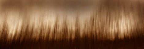 Foresta dell'impressionista Fotografia Stock