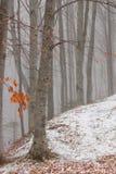 Foresta dell'inverno Fotografia Stock Libera da Diritti