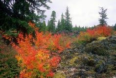 Foresta dell'Oregon Immagine Stock