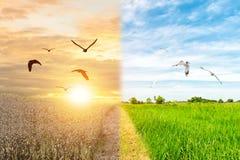 Foresta dell'uccello di siccità e di volo della foresta del cambiamento dell'ambiente di concetto di ecologia immagine stock