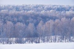 Foresta della betulla sotto la brina nella stagione invernale immagine stock