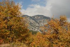 Foresta della castagna sui pendii di Parnona Immagine Stock Libera da Diritti