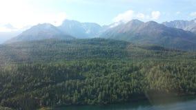 Foresta della collina Immagine Stock