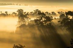 Foresta della copertura della foschia durante l'alba al parco nazionale Phitsanulok e Phetchabun di Thung Salaeng Luang della Tai fotografia stock libera da diritti