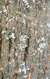 Foresta della corteccia di albero Immagine Stock