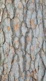 Foresta della corteccia di albero Fotografia Stock Libera da Diritti