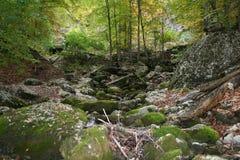 Foresta della Crimea Immagini Stock Libere da Diritti