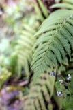 Foresta della felce fresca Immagini Stock