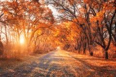 Foresta della foresta di autunno con la strada campestre al tramonto Immagini Stock