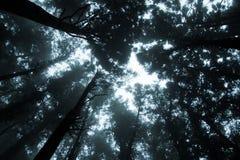 Foresta della foschia Fotografia Stock Libera da Diritti