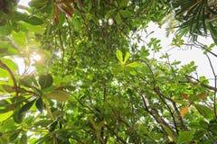 Foresta della giungla con luce solare Immagini Stock Libere da Diritti