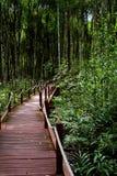 Foresta della mangrovia fotografia stock