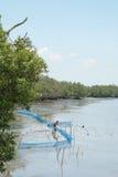 Foresta 1 della mangrovia Fotografie Stock