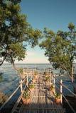 Foresta 1 della mangrovia Immagine Stock