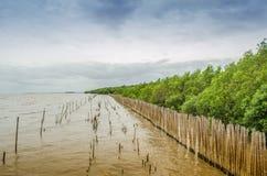 Foresta della mangrovia. Fotografia Stock Libera da Diritti