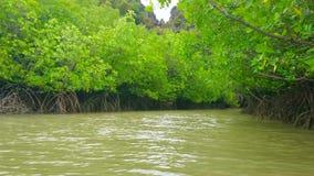 Foresta della mangrovia all'isola di Koh Talu, Tailandia video d archivio