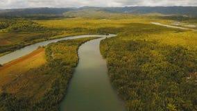 Foresta della mangrovia in Asia Isola di Filippine Catanduanes stock footage