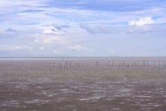 Foresta della mangrovia con il cielo Fotografie Stock