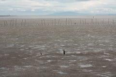 Foresta della mangrovia con il cielo Immagine Stock Libera da Diritti