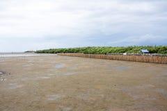 Foresta della mangrovia con il cielo Fotografie Stock Libere da Diritti
