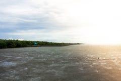 Foresta della mangrovia con il cielo Immagini Stock