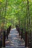Foresta della mangrovia con il ponte di legno Fotografia Stock Libera da Diritti