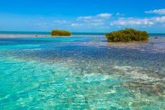 Foresta della mangrovia in Cuba Largo di Cayo dell'isola fotografia stock libera da diritti