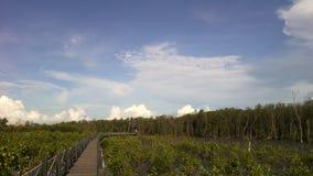 Foresta della mangrovia della nuvola del cielo e ponte bianchi di legno Fotografie Stock Libere da Diritti