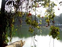 Foresta della mangrovia di Sundarban Immagini Stock
